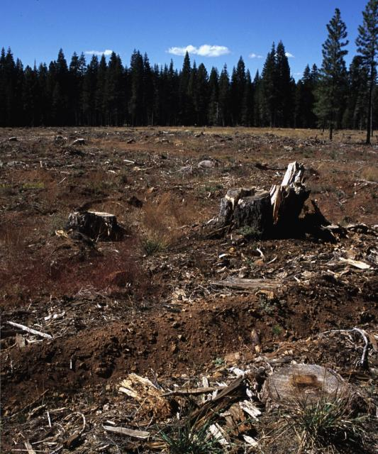 Recently clear-cut area in Plumas National Forest, Plumas County, Calif. Photo: USGS