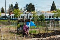 Elder working in her garden next to Seattle's light rail link.  ©2012 Carina A. del Rosario